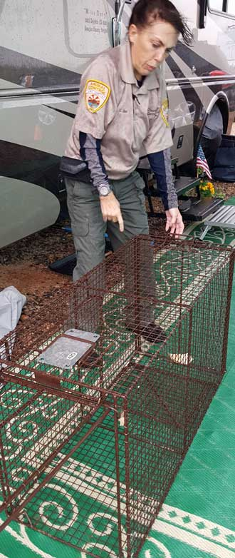 Shea, La Paz County Animal Control brings a trap to catch the dog