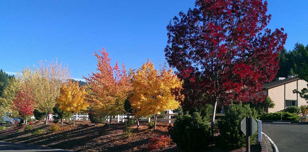 Fall colors arrive at Timber Valley RV Park