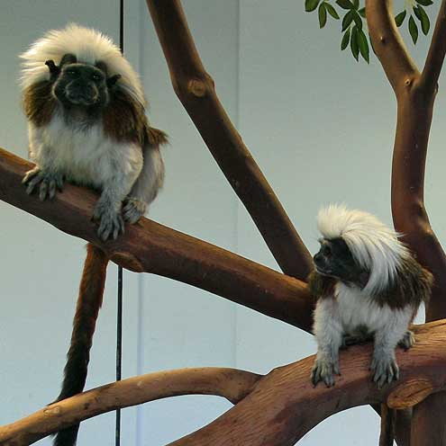 These are cute little monkeys