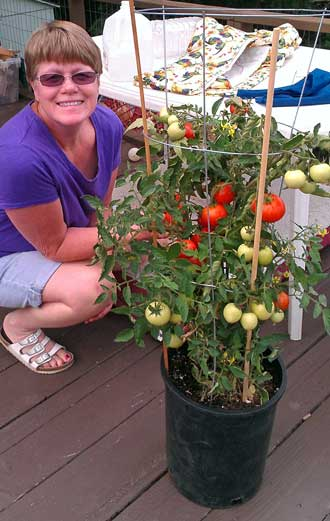 Gwen finds our tomato plant has been well watered, Behind: Our Cameo is ready for us
