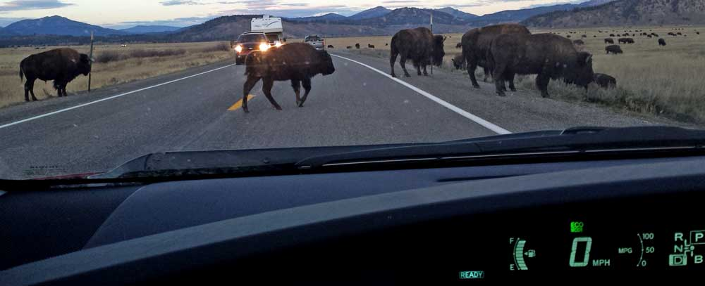 Slow, Bison in the road!, Behind: The mood changes in the Teton Range
