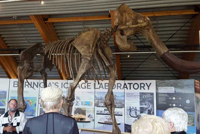 We visit the Beringia Museum and education story