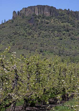 Table Rock Mountain with pears in bloom