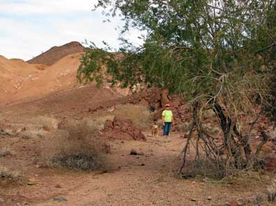 Hiking the Painted Desert Trail