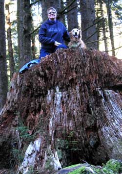 Atop a giant Sitca Spruce stump