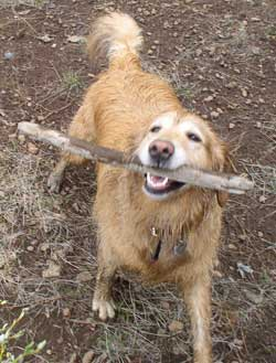 Throw anything, even a stick and I'll go get it for you.